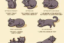 Catsu the cat