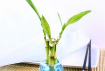 Events & Weddings / Timeless Zen inspired event favors, add a bright touch of nature and balance to your special event.