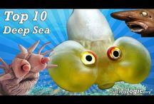 Sea creatures / by Kimberly Fox