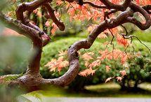 Trees / by Genevieve Koenig