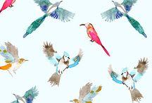 birds patterns