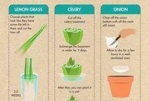 10 repeatable.vegies.food