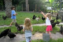 COOP CREDITS / Our non-profit to teach kids about animal welfare and get them super excited about dirt!