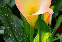 Blooming Flora / Blooming flowers