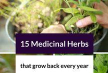 {{medicinal herb garden}}