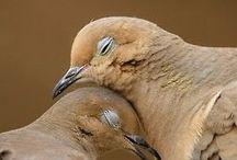 Lovebirds i love