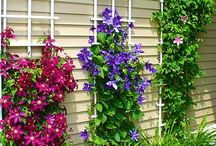 Мой красивейший сад