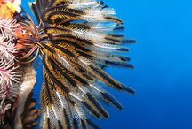 ocean  koralowce