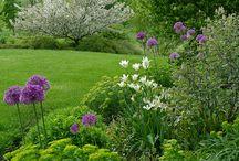 Gardens / by Jenny Katatumba