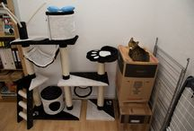 Cat Logic / Hilarious Examples Of Cat Logic That Every Owner Has Encountered