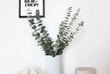 Eukaliptusek