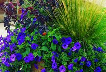 Container gardening and Wreaths... / by Sue Decker