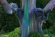Distinctive tree bark