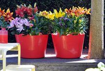 All About Mooi Wat Planten Doen