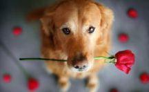 přání pes