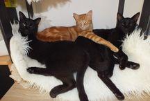 Cats - Katzen / Our cats here in Uruguay - Unsere Katzen hier in Uruguay