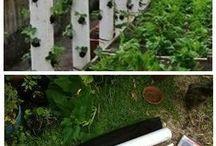 rośliny  pomysły