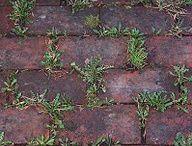 gardening tips / by Nancy Kirk