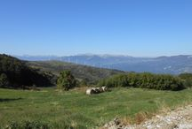 """Itinerario """"Lungo le vie dei tratturi in Puglia, con uno sguardo al Molise"""" / Lungo le vie degli antichi tratturi, i sentieri che i pastori percorrevano per la transumanza delle greggi, la cui antica 'regione' comprendeva le attuali Puglia, Basilicata, Campagnia, Molise e Abruzzo. Articolo: http://www.ideepugliesi.it/2014/01/28/lungo-le-vie-dei-tratturi-in-puglia/"""