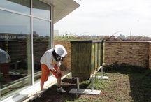 městské včelaření