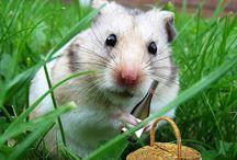 Hamster / Мыши, хомяки и прочие грызуны.
