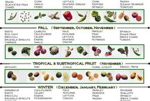 When to Plant Vegetables / When to plant Vegetables