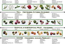 planting vegies