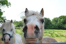 Happy Animals / Dieren waar je helemaal blij van wordt! :D