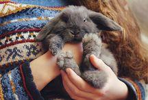 Cute things.