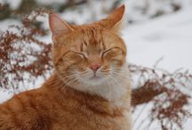 FERAL CATS - Very Important Information