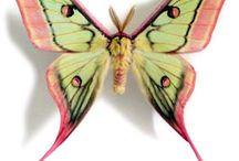 butterflies☆