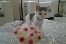 bizim kedicik