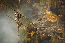 Culegatorii de miere din Nepal