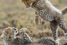 keturah animals