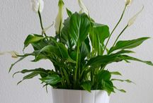 Planten voor de slaapkamer