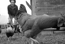 Conversations with Farm Women, The Stories