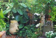 patio + garden