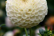 favorite flower varieties
