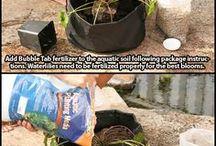 vatten växter o andra dekorationer