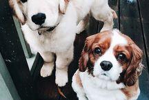 Cachorros lizy
