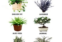 in door plants