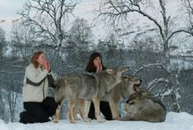 Norwegian Park / This type of interaction between humans and wolves is possible in Norwegian park only. Polar animals in the park were raised around people, so be calm in their presence, to enjoy it. Visitors to the park are invited to enjoy this unique opportunity to get to know more closely the wolves and their way of life.