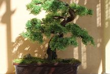 Bonsai Zokei made to individual order / Wykonuję drzewka bonsai zokei na indywidualne zamówienia. Mogą być różnej wielkości i w różnych stylach bonsai.(I do bonsai trees Zokei for individual orders. They can be different sizes and styles of bonsai.)