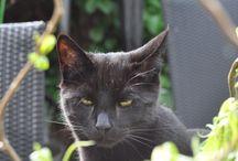 Katten / Droppie & Shadow