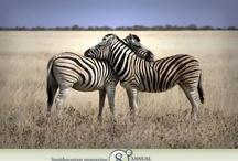 Animals Make Me Happy! / by Sylvie Banville