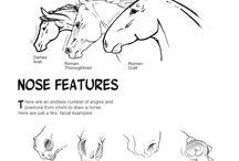 Анатомия (Shetland pony)
