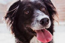 Haustiere: Hund, Katze, Aquarium / Bewährte Tipps und Ratgeber von Experten rund um den besten Freund der Familie: Ob Hund, Katze oder Aquarium.