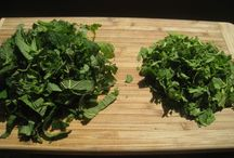Herbs/Recipes / by Daisy Viktoria