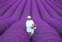 Favorite Places & Spaces / by Lisa Bonelli