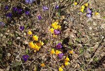 Kevät Spring
